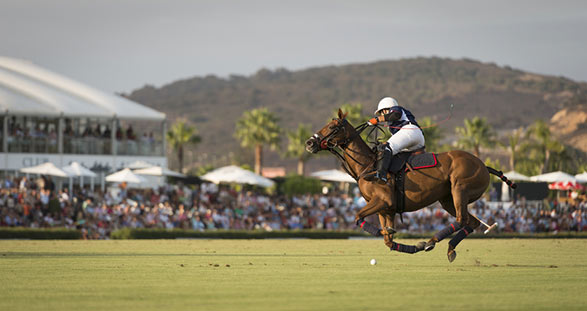 Polo-Events mit Elite Escort
